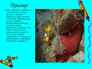 Пример: Рыба амфиприон скрывается среди щупалец морского анемона - актинии. Щ