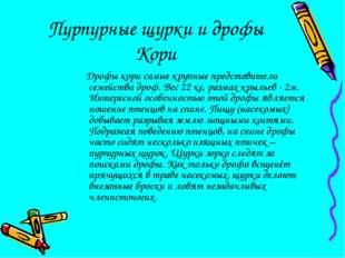 Пурпурные щурки и дрофы Кори Дрофы кори самые крупные представители семейства