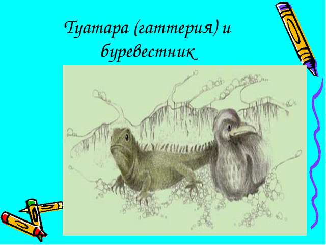 Туатара (гаттерия) и буревестник