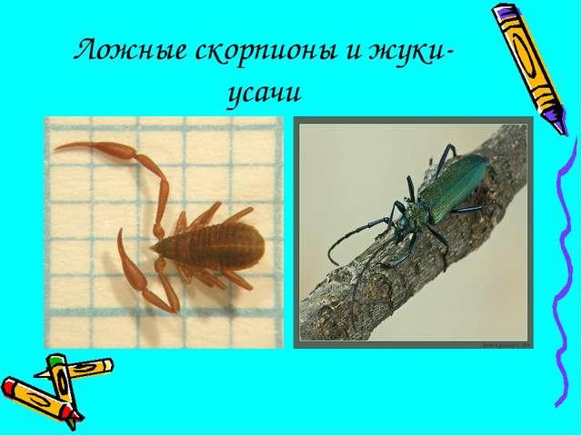 Ложные скорпионы и жуки-усачи
