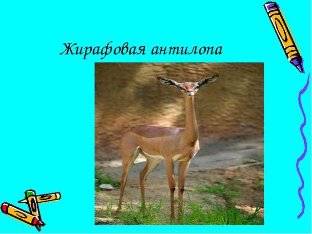 Жирафовая антилопа