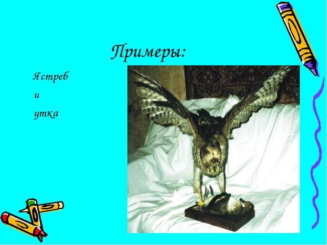 Примеры: Ястреб и утка