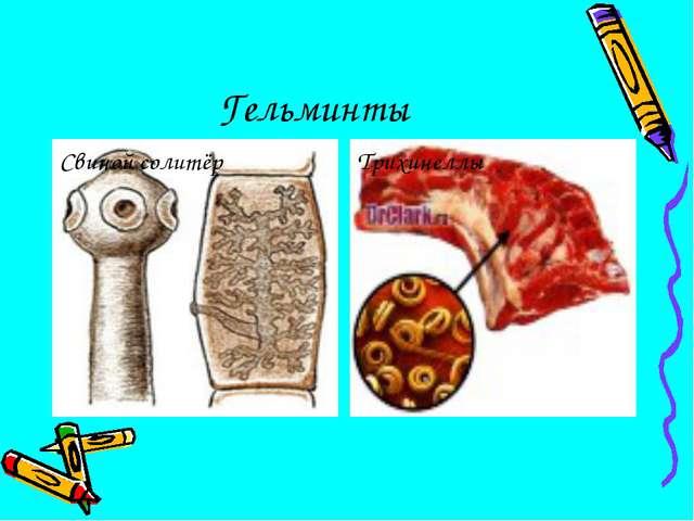 Гельминты Свиной солитёр Трихинеллы