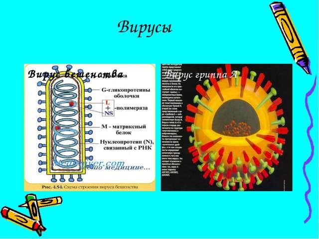 Вирусы Вирус бешенства Вирус гриппа А