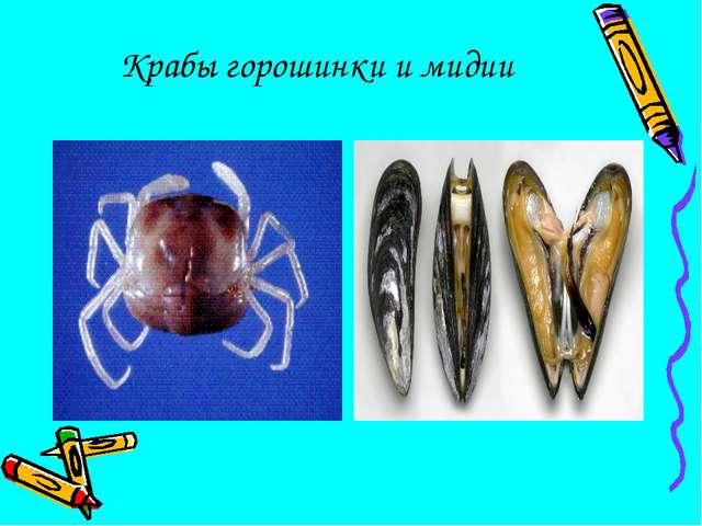 Крабы горошинки и мидии