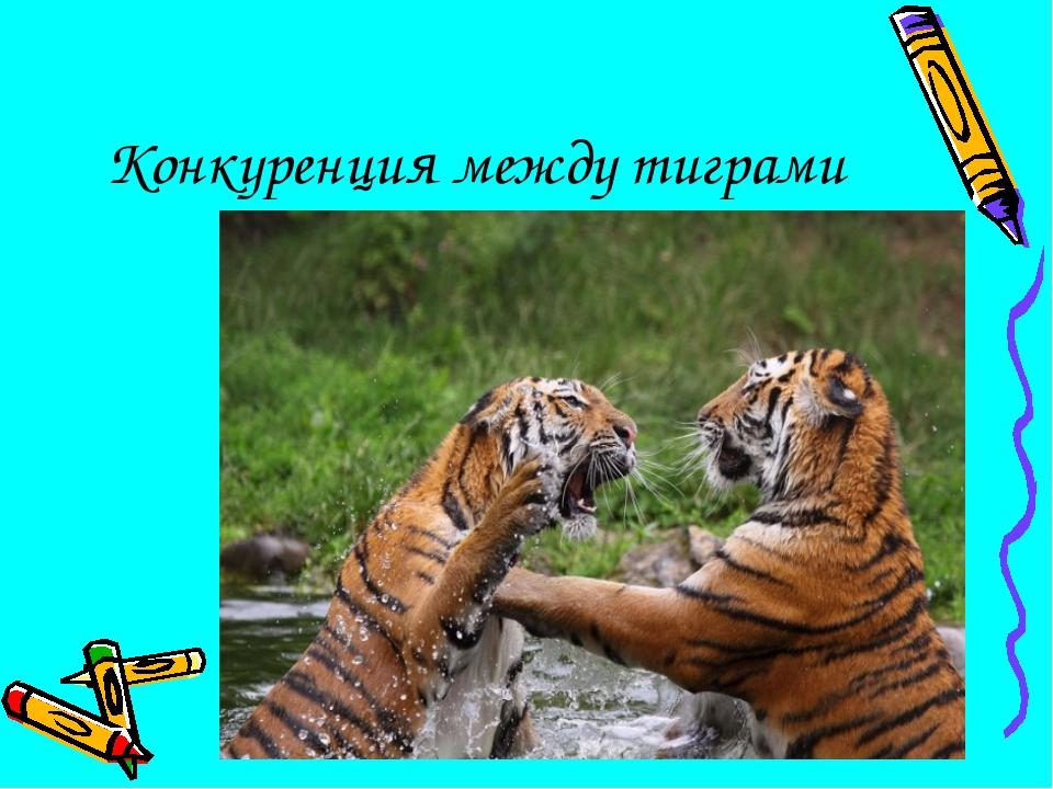 Конкуренция между тиграми