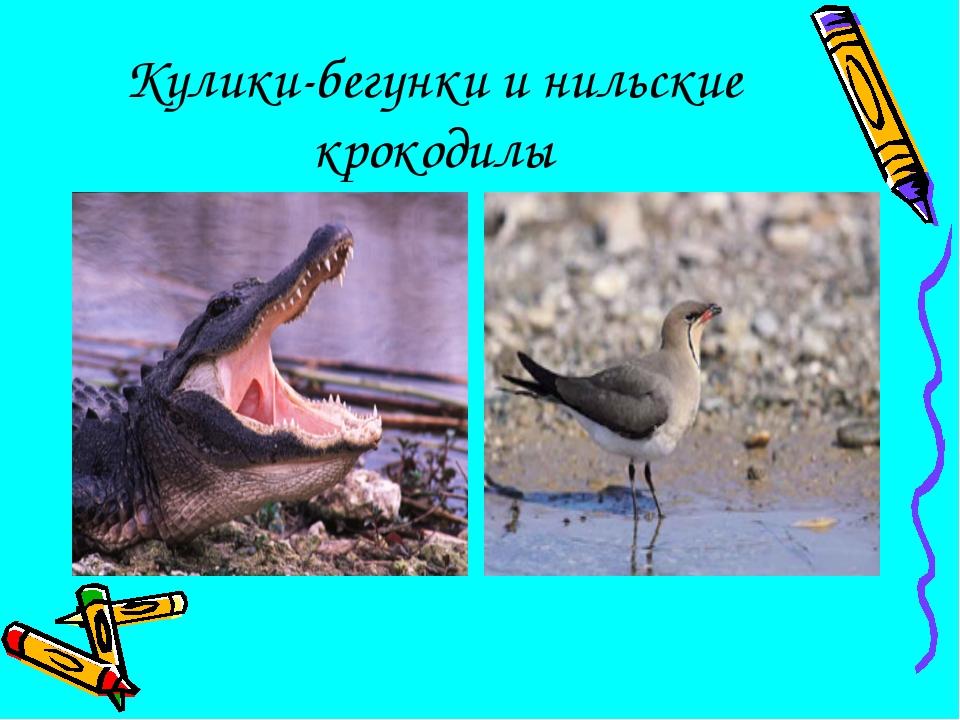 Кулики-бегунки и нильские крокодилы