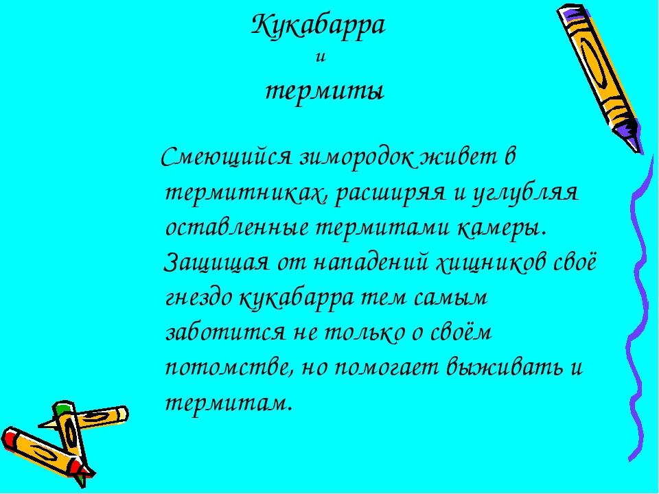 Кукабарра и термиты Смеющийся зимородок живет в термитниках, расширяя и углу...