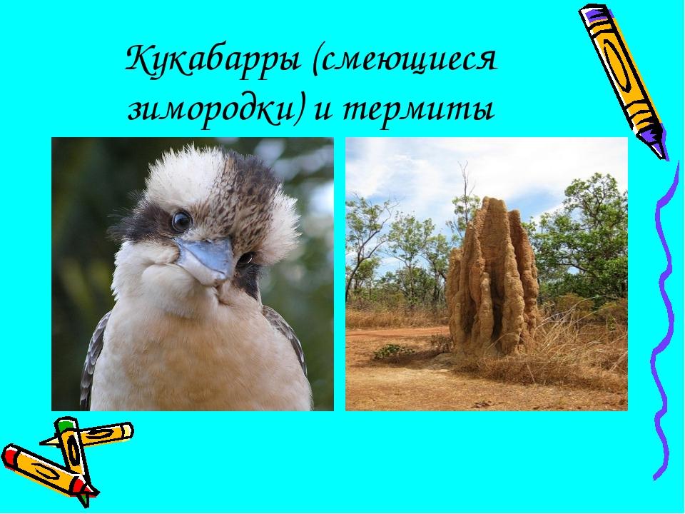 Кукабарры (смеющиеся зимородки) и термиты