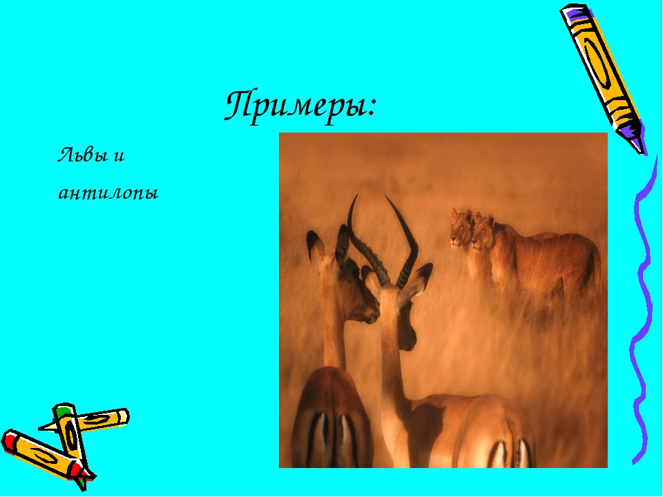Примеры: Львы и антилопы