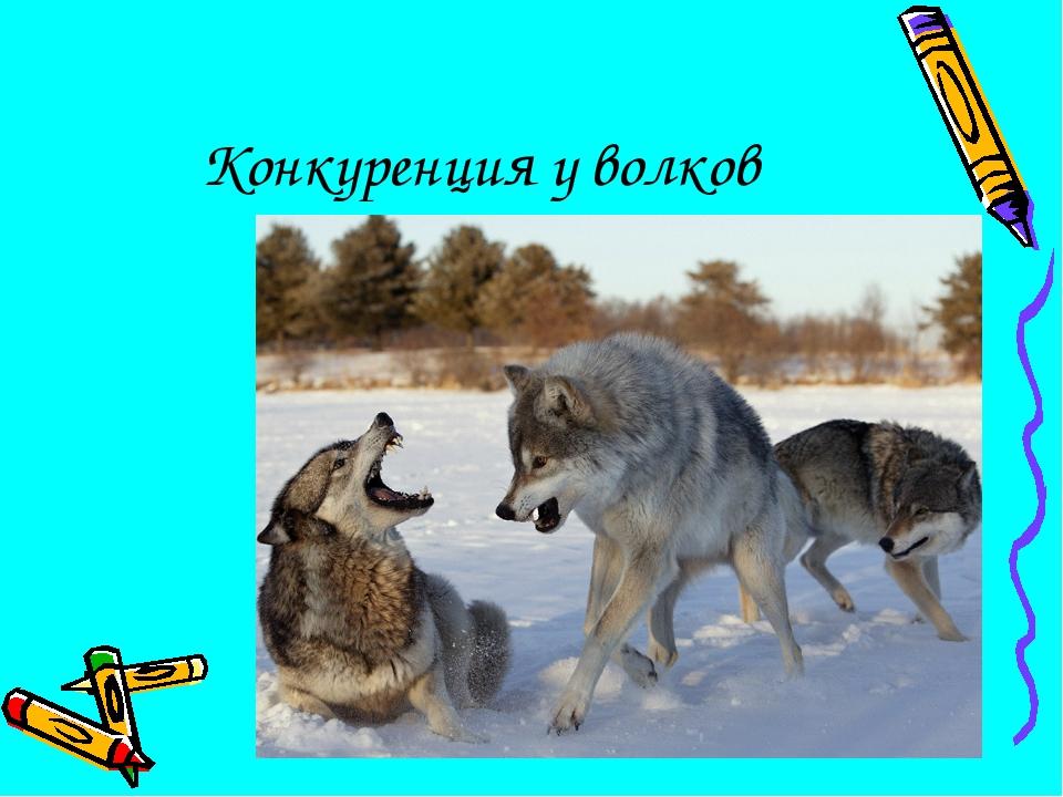 Конкуренция у волков