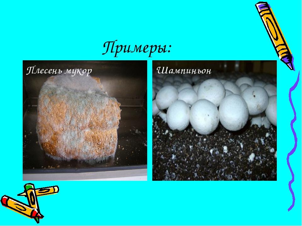 Примеры: Плесень мукор Шампиньон
