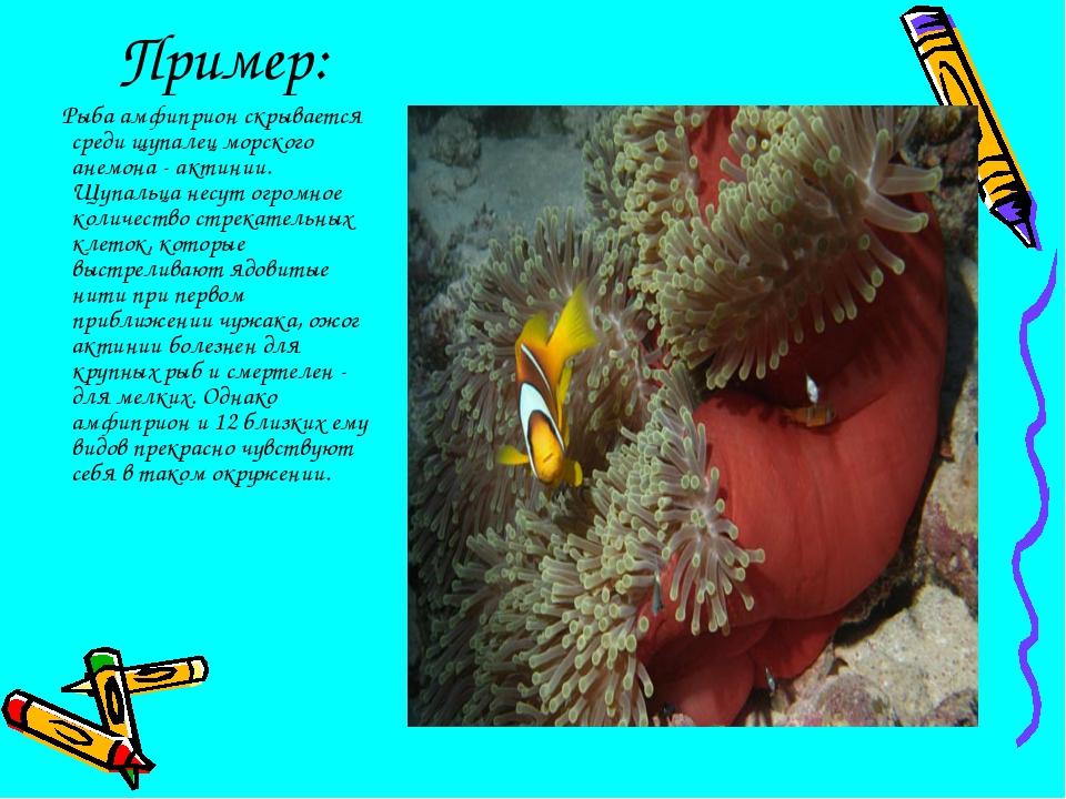 Пример: Рыба амфиприон скрывается среди щупалец морского анемона - актинии. Щ...