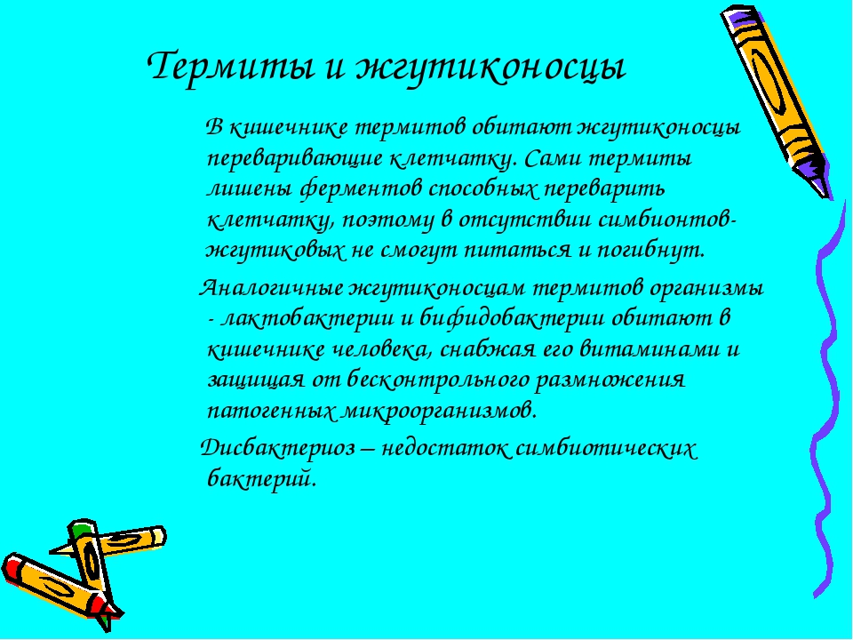 Термиты и жгутиконосцы В кишечнике термитов обитают жгутиконосцы переваривающ...