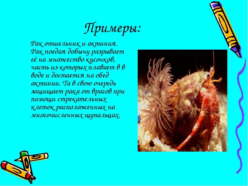 Примеры: Рак отшельник и актиния. Рак поедая добычу разрывает её на множество...