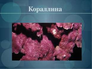 Кораллина