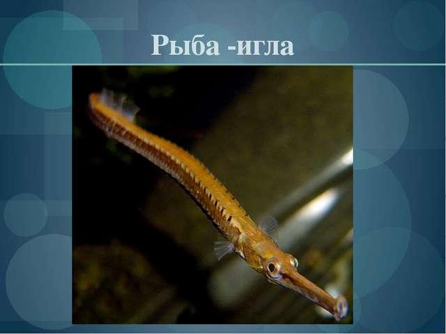 Рыба -игла