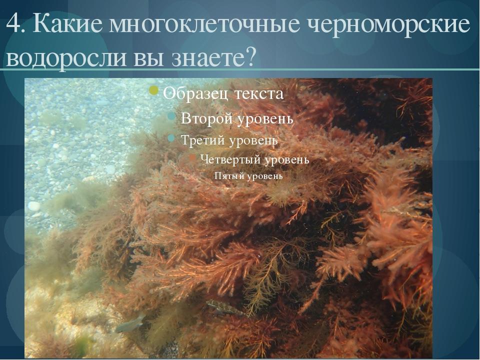 4. Какие многоклеточные черноморские водоросли вы знаете?