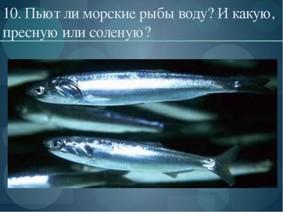10. Пьют ли морские рыбы воду? И какую, пресную или соленую?
