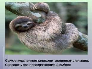 Самое медленное млекопитающееся- ленивец. Скорость его передвижения 2,5м/сек