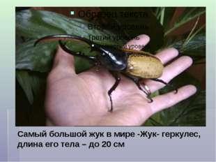 Самый большой жук в мире -Жук- геркулес, длина его тела – до 20 см