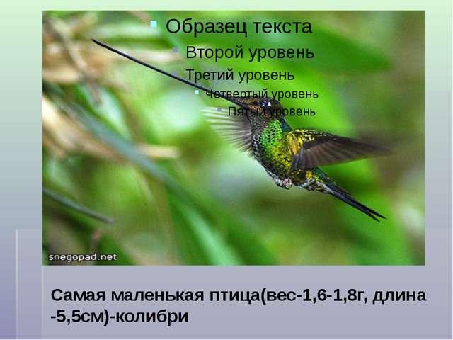 Самая маленькая птица(вес-1,6-1,8г, длина -5,5см)-колибри
