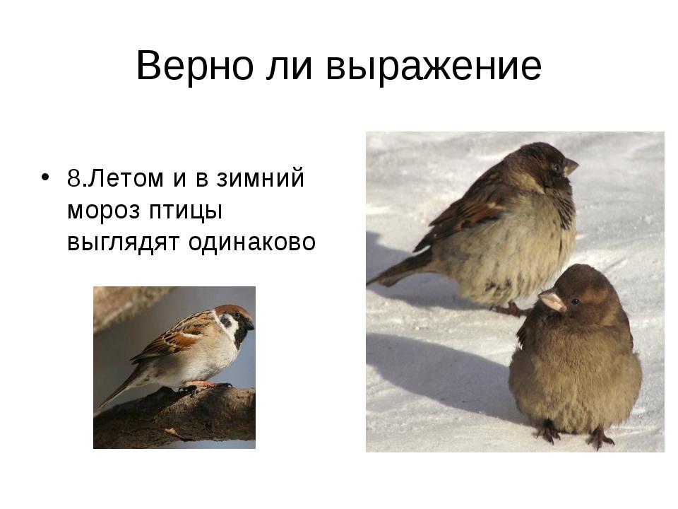 Верно ли выражение 8.Летом и в зимний мороз птицы выглядят одинаково