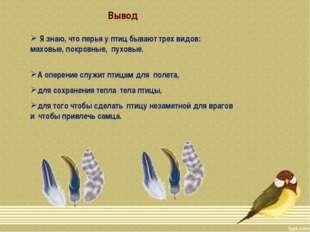 Я знаю, что перья у птиц бывают трех видов: маховые, покровные, пуховые. А о