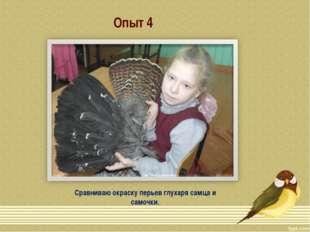 Опыт 4 Сравниваю окраску перьев глухаря самца и самочки.