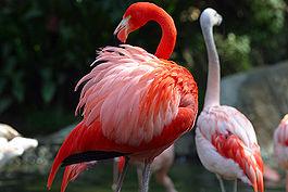C:\Users\Admin\Desktop\исслед работы\265px-Lightmatter_flamingo.jpg