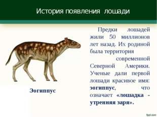 История появления лошади Предки лошадей жили 50 миллионов лет назад. Их родин