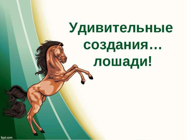 Удивительные создания… лошади!