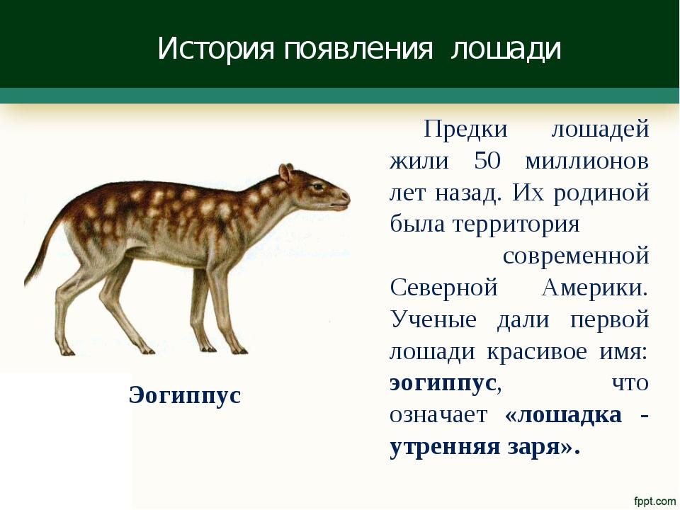 История появления лошади Предки лошадей жили 50 миллионов лет назад. Их родин...