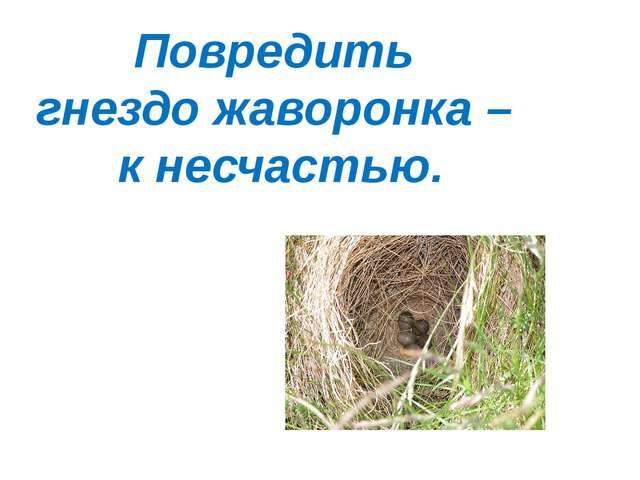 Повредить гнездо жаворонка – к несчастью.