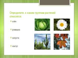 Определите, к каким группам растений относятся: клён ромашка капуста кактус т