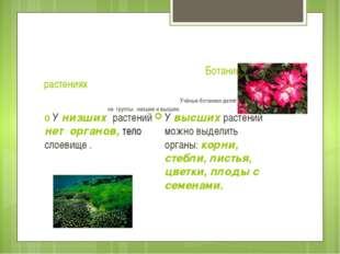 Ботаника – наука о растениях Учёные-ботаники делят царство растений на групп