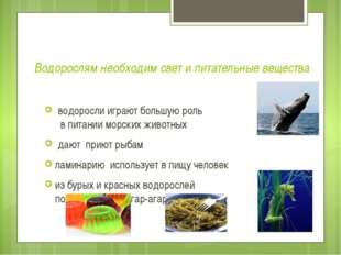 Водорослям необходим свет и питательные вещества водоросли играют большую рол
