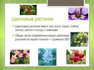 Цветковые растения Цветковые растения имеют все части: корни, стебли, листья,