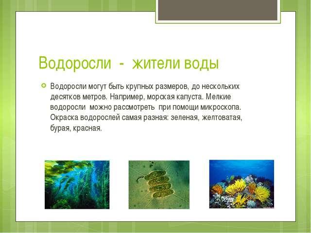 Водоросли - жители воды Водоросли могут быть крупных размеров, до нескольких...