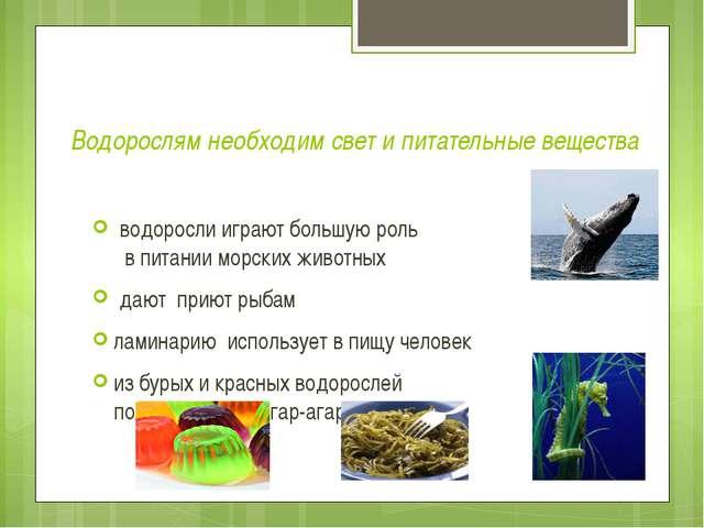 Водорослям необходим свет и питательные вещества водоросли играют большую рол...