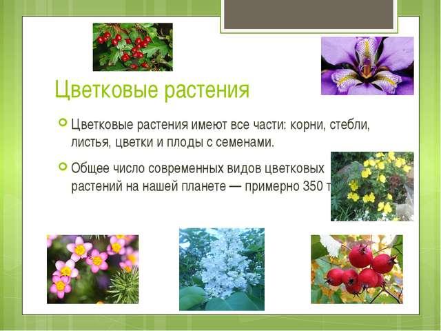 Цветковые растения Цветковые растения имеют все части: корни, стебли, листья,...