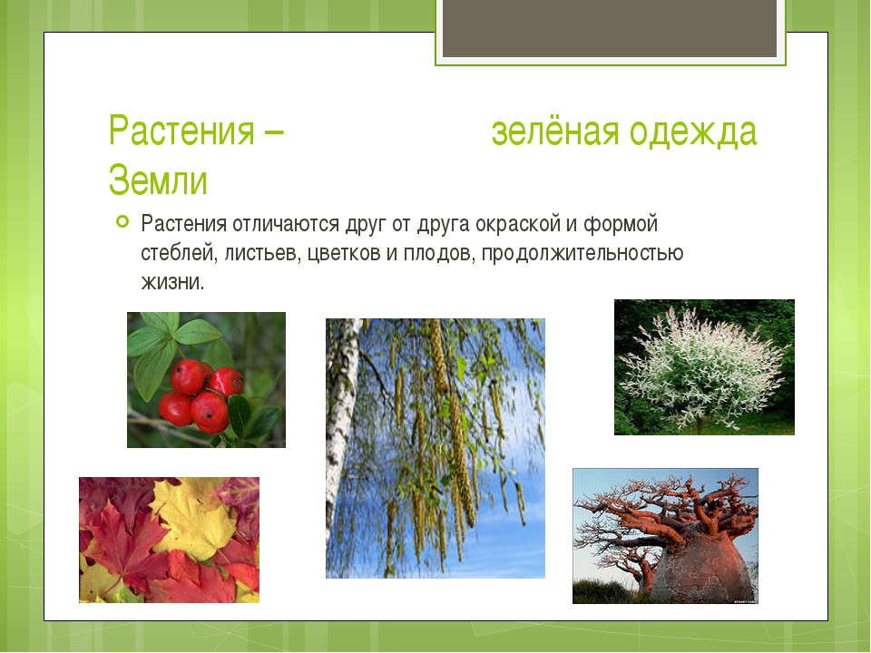 Растения – зелёная одежда Земли Растения отличаются друг от друга окраской и...