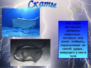 Эта рыба заставляет цепенеть животных , которых она хочет поймать, пересилива