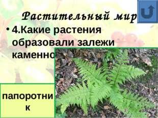 Растительный мир 4.Какие растения образовали залежи каменного угля? папоротник