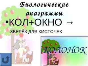 Биологические анаграммы КОЛ+ОКНО → ЗВЕРЁК ДЛЯ КИСТОЧЕК КОЛОНОК
