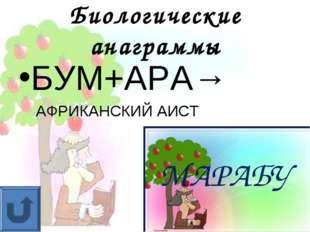 Биологические анаграммы БУМ+АРА→ АФРИКАНСКИЙ АИСТ МАРАБУ