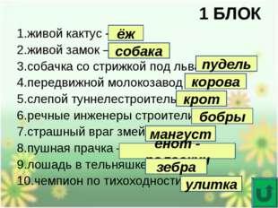 1 БЛОК 1.живой кактус – 2.живой замок – 3.собачка со стрижкой под льва – 4.пе