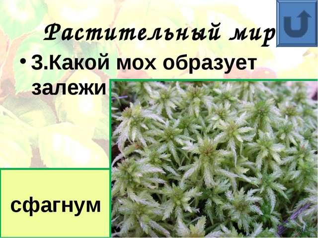 Растительный мир 3.Какой мох образует залежи торфа? сфагнум