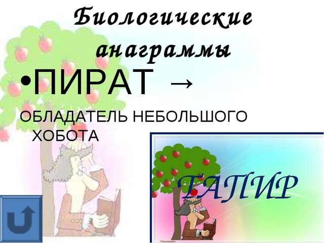 Биологические анаграммы ПИРАТ → ОБЛАДАТЕЛЬ НЕБОЛЬШОГО ХОБОТА ТАПИР