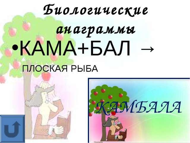 Биологические анаграммы КАМА+БАЛ → ПЛОСКАЯ РЫБА КАМБАЛА